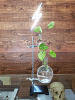 Hydroponic Propagation Station - THE STEMCELL SCIENCE SHOP
