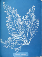 Cyanotype Paper - THE STEMCELL SCIENCE SHOP