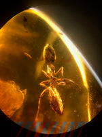 Fossilized Insect in Amber