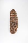 Woolly Mammoth Tooth Fossil