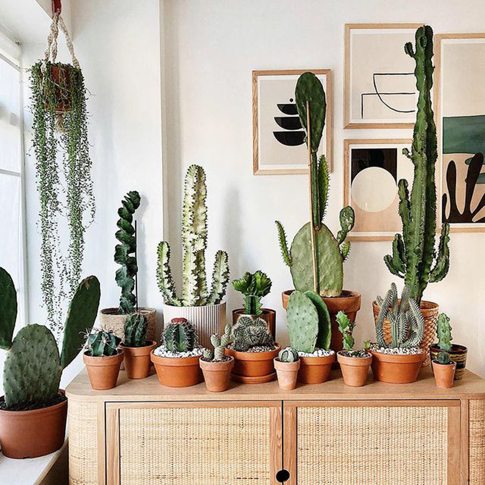 Plant-Parenting 101: How to Keep Your Houseplants Happy This Winter