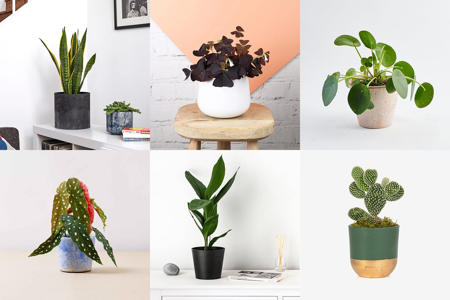 10 Houseplants to Spruce Up Your Space This Spring