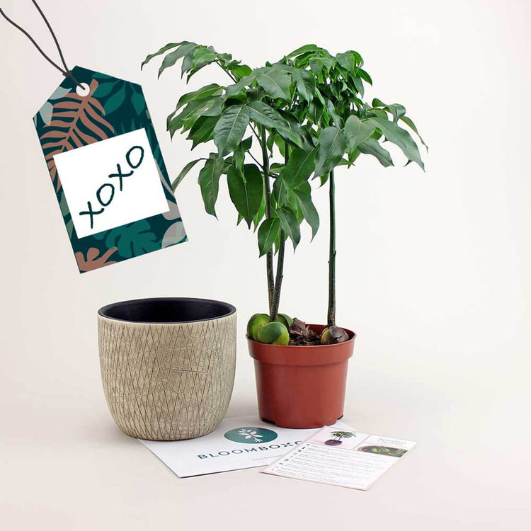 Plant Gift Subscription from Bloombox Club