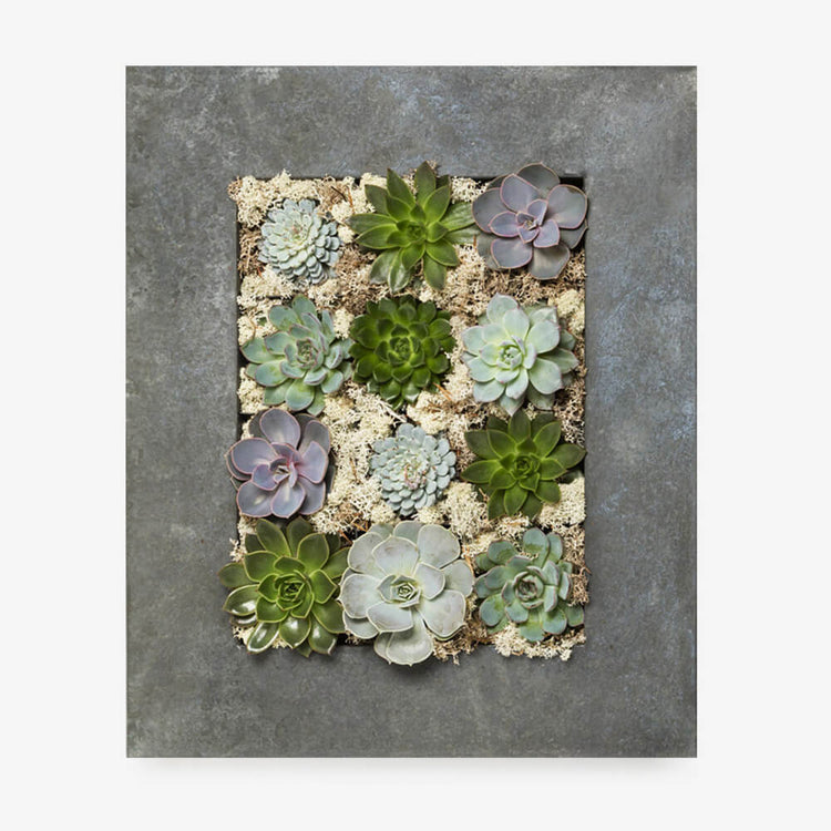 Wall Succulent Planter from The Urban Botanist