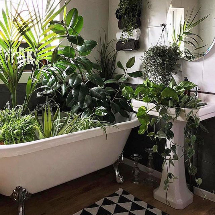 Houseplants in the bath. Photo by @artynads