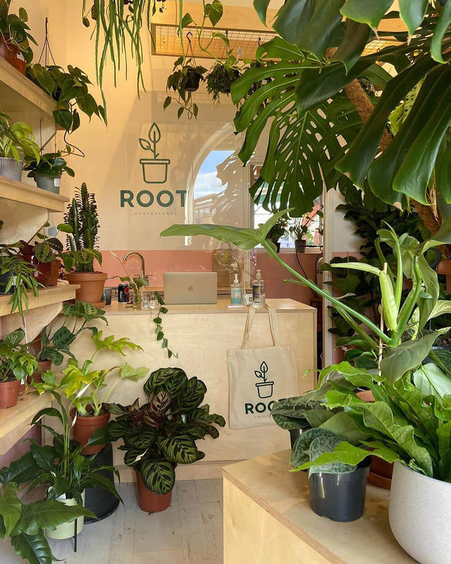 Root Houseplants, Liverpool & West Kirby