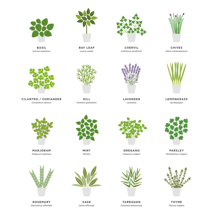 Kitchen herbs illustration print