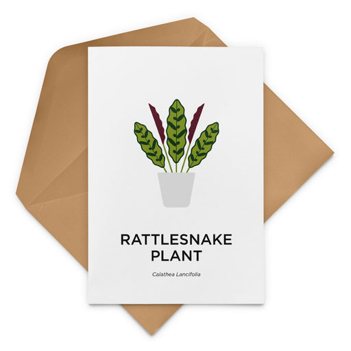Rattlesnake Plant Greeting Card