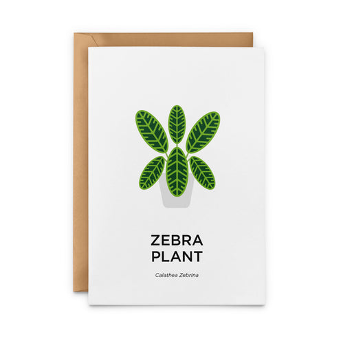 Zebra Plant Greeting Card