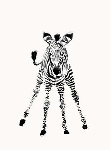 Baby Zebra Wall Print - Mandi at Home