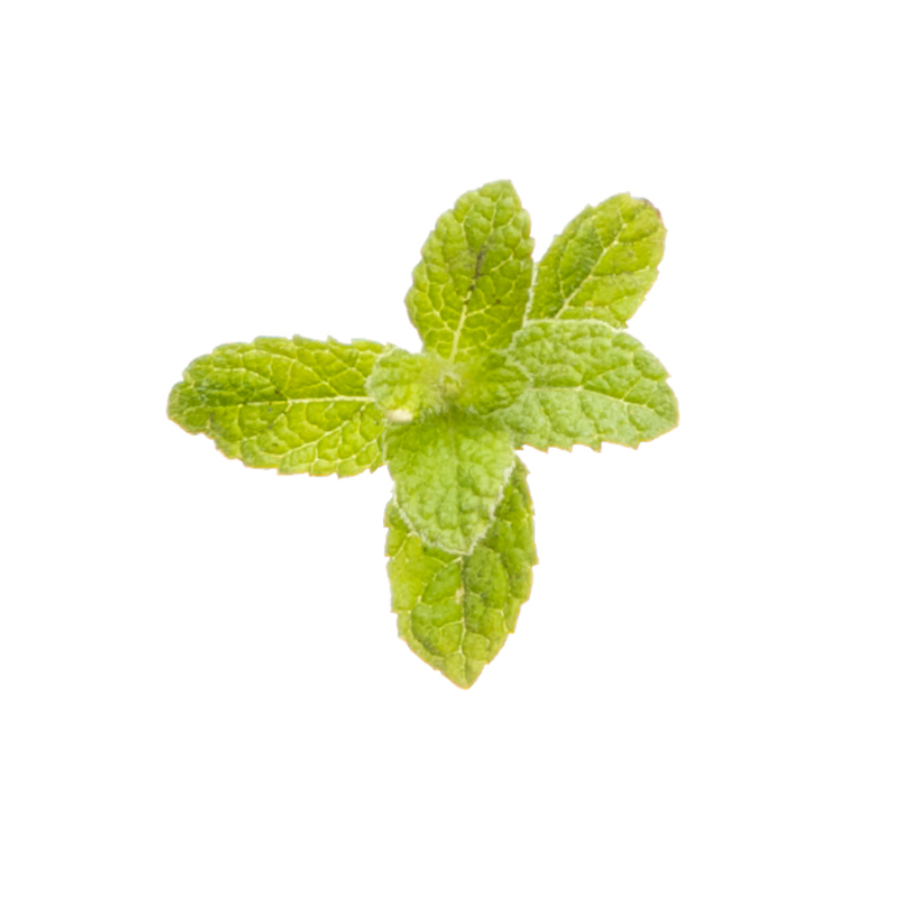 DoTERRA Essentials Oils - Peppermint Oil