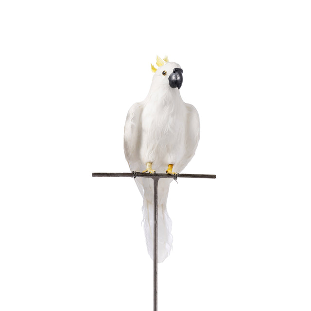 Artificial Bird - Large Parrot (Side)