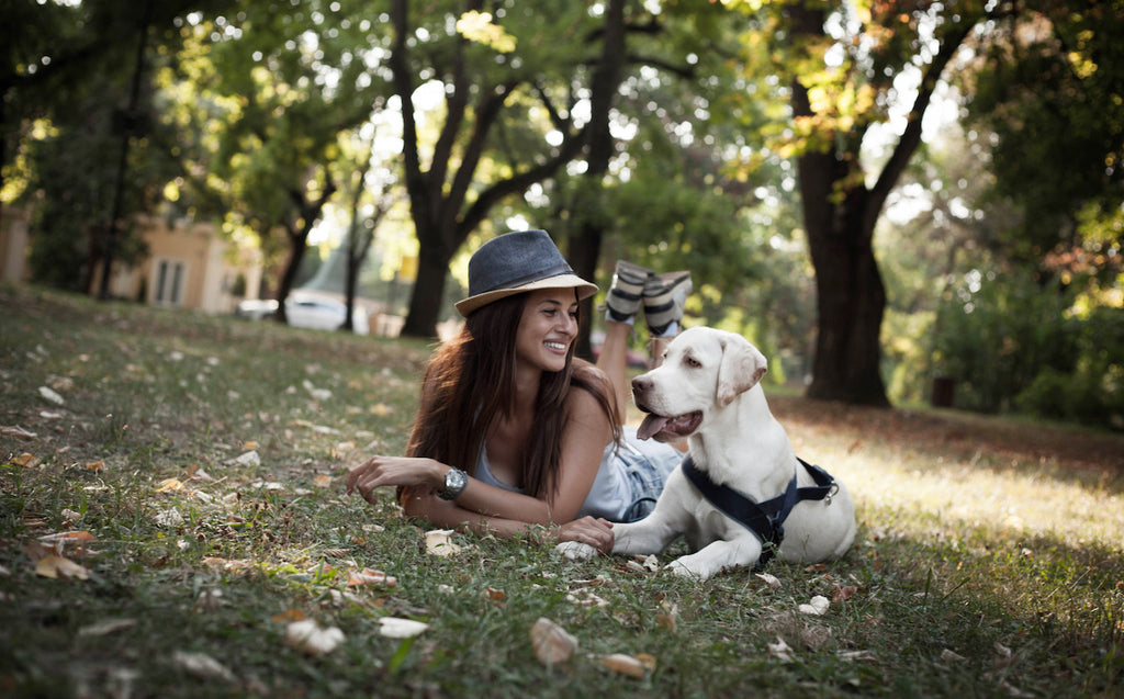 CBD Benefits For Dogs - Owners' Stories