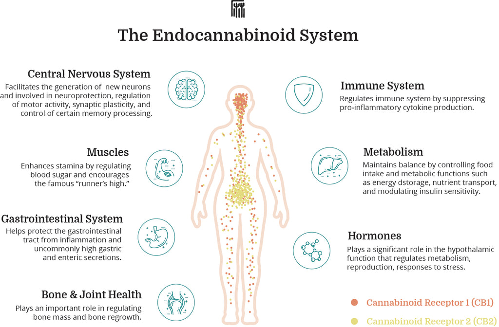 cbd oil and the endocannabinoid system for pain relief, anxiety, depression and inflammation.