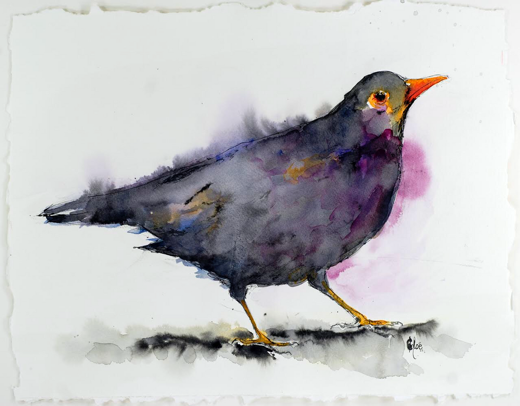 Fancy Blackbird