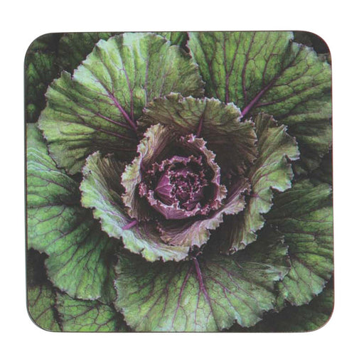 Cabbage Art Coasters - Set of 4