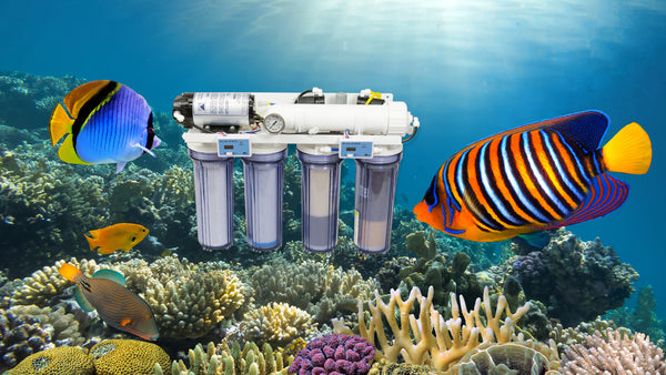 Aquarium Filtration System for Water Conservationists