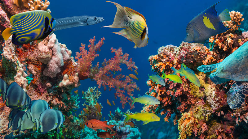 Our 5-Point Assessment Can Save Marine Life!