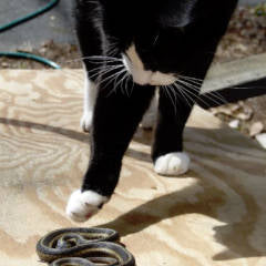 Cats and Snakes – Do You Know What To Do?