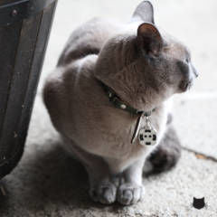 Cat Collars: What Are the Benefits and How to Properly Fit Them