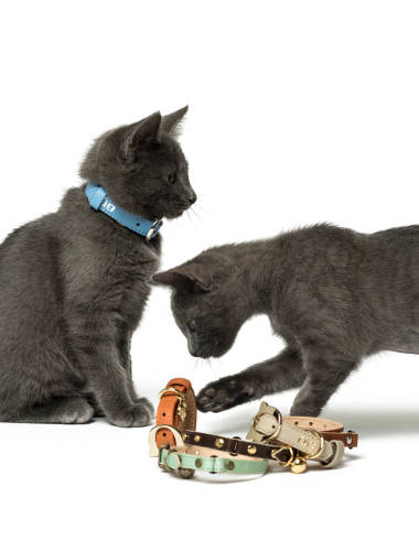 Land of Meow Cat Collars