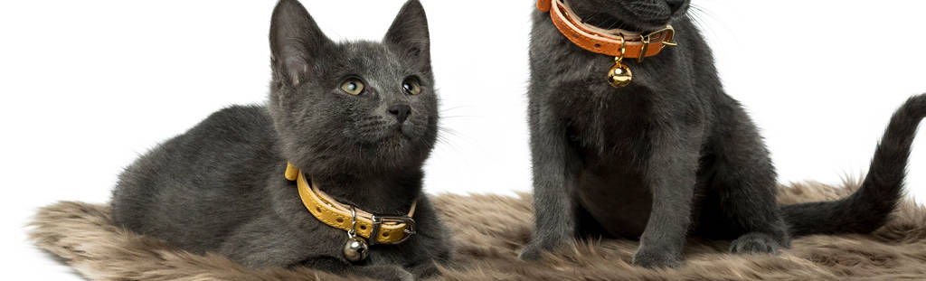 Land-of-Meow-Linny-Cat-Collar-Collection