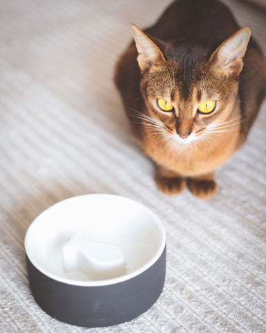 Land of Meow Magisso Cat Bowls