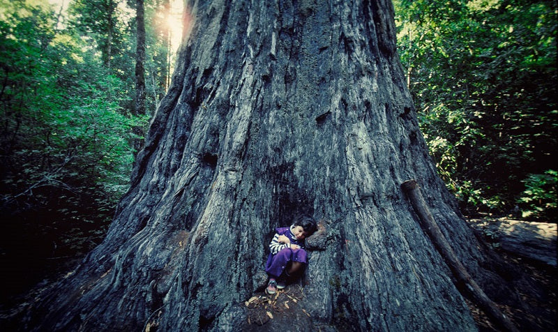 Ardis Barrow as a child with a Redwood tree