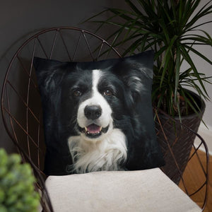 Beautiful Border Collie 18x18 Pillow