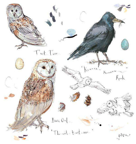 Madeleine Floyd- Barn Owl and Rook Sketchbook