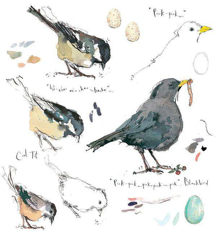 Madeleine Floyd-Blackbird and Coal Tit Sketchbook