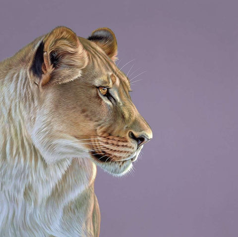 Darryn Eggleton Queen of the Savannah art print