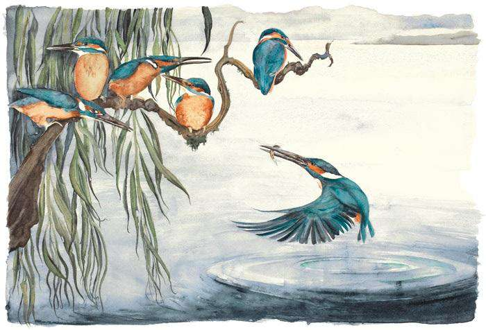 Jackie Morris & Robert MacFarlane The Lost Words Kingfishers Limited Edition Print