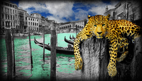 Lars Tunebo photography leopard in venice canals