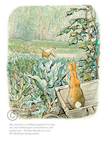 Beatrix Potter-Peter Rabbit | Official Collector's Edition | Free UK Delivery
