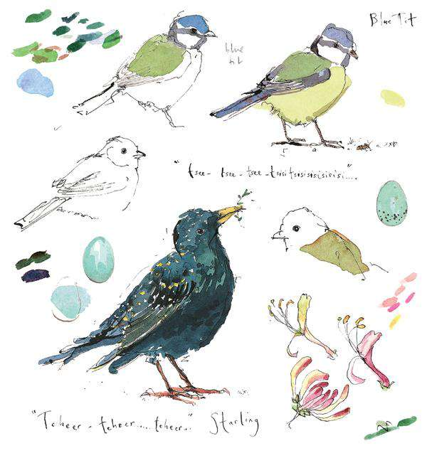 Madeleine Floyd- Blue Tit and Starling Sketchbook