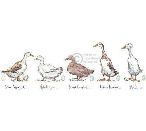 Madeleine Floyd Ducks mounted