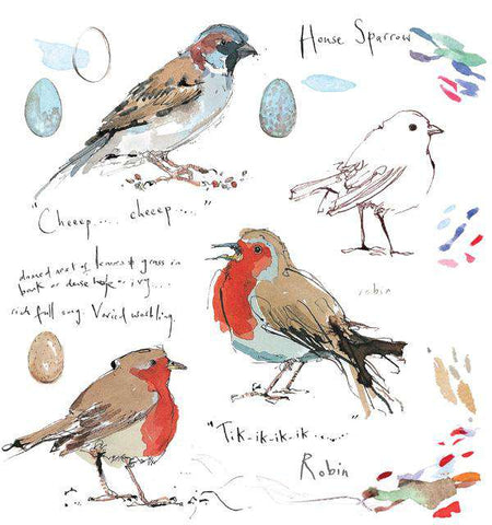 Madeleine Floyd Robin and House Sparrow Sketchbook