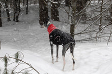Load image into Gallery viewer, Great White North Winter Jacket for Greyhounds by Chilly Dogs - Red