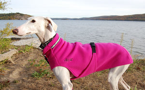 Chilly Sweater for Greyhounds by Chilly Dogs - Blaze Orange