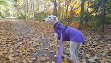 Load image into Gallery viewer, Chilly Sweater for Greyhounds by Chilly Dogs - Imperial Purple