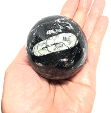 "Load image into Gallery viewer, Orthoceras Fossilized Sphere 276g 60mm 2"" - Higher Vibe Crystals"