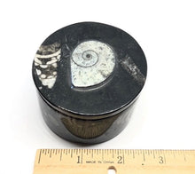 Load image into Gallery viewer, Ammonite-Orthoceras Fossilized Jewelry/Trinket Box 273g (Morocco)