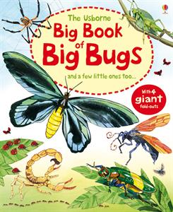 Big Book of Big Bugs - Hardcover