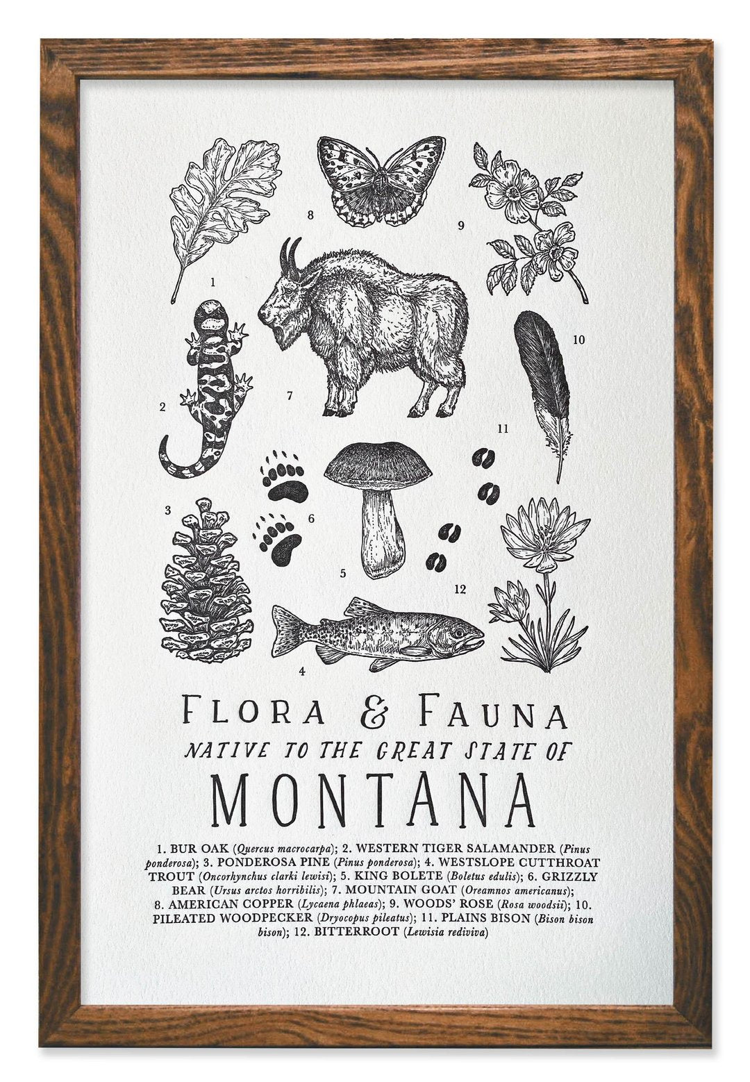 ART PRINT: Montana Field Guide Letterpress Print - by The Wild Wander