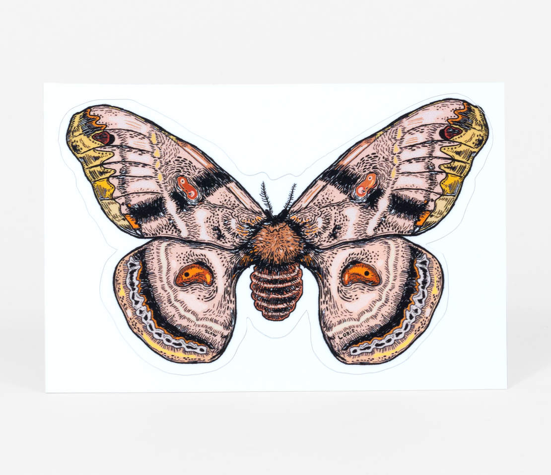 Sticker - Moth Decal