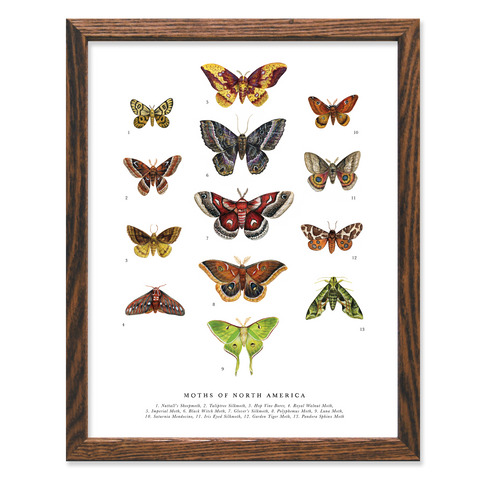 ART PRINT: Moths of North America - by The Wild Wander