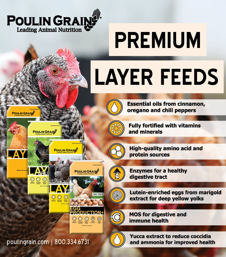 #PoulinPowered Blog: 6 Reasons Our Premium Poultry Feeds Can't Be Beat