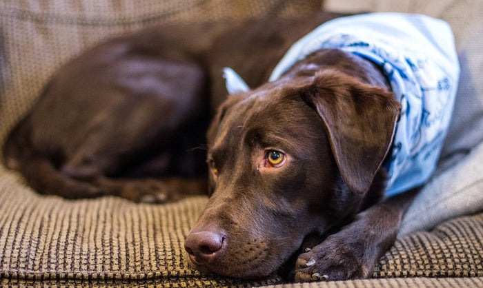 Follow These Steps If Your Pet Has an Anxiety Problem
