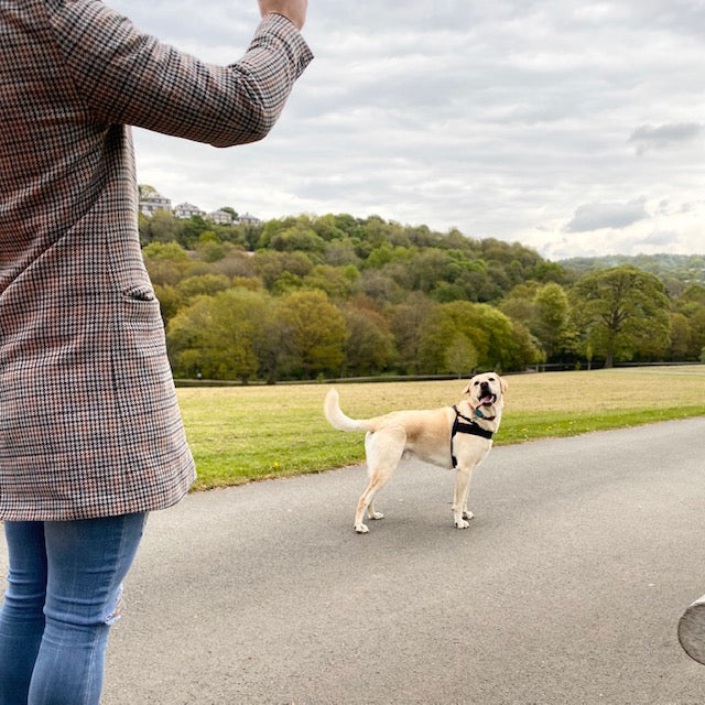 How you can keep your dog busy and entertained at home when you can't explore the great Yorkshire outdoors?